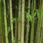 Υφασμάτινες πάνες από ίνες μπαμπού